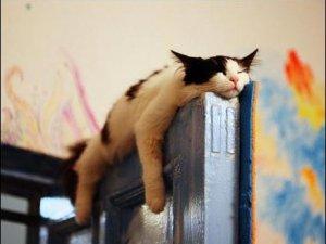 gato vago
