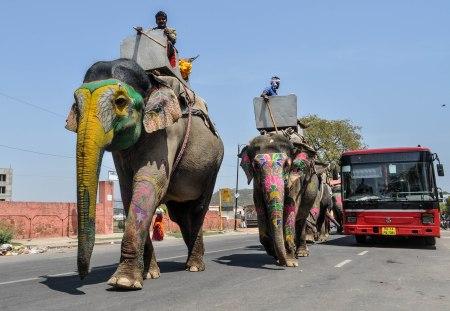 elefantes-india